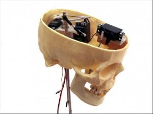 Skull_Side_Full_IMG_0067