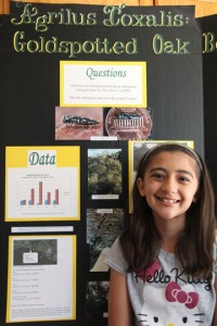 Krystal and her oak borer beetle infestation science project.